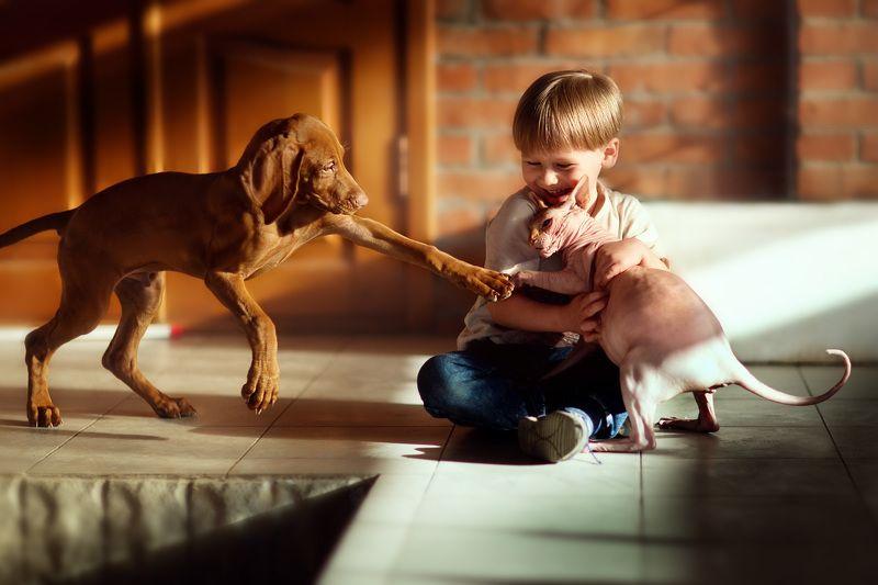 ребенок мальчик собака кошка животные смех веселье игра удовольствие 85мм семья Дружба...как кошка с собакой)photo preview