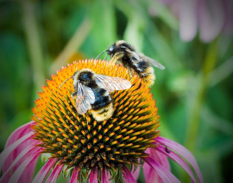 Цветы, пчёлы, Пушистикиphoto preview