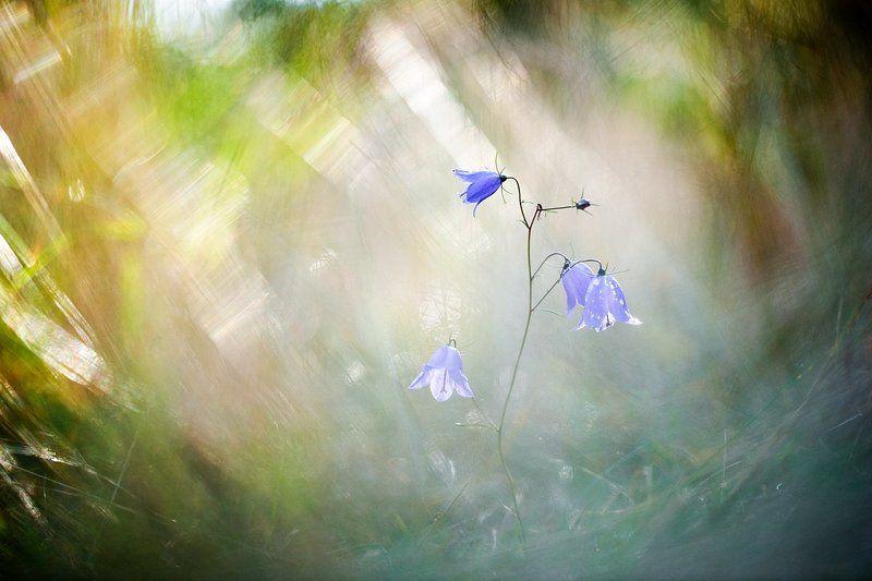 цветы, цветок,макро,растения,природа, колокольчик,осень,боке Смена декорацийphoto preview