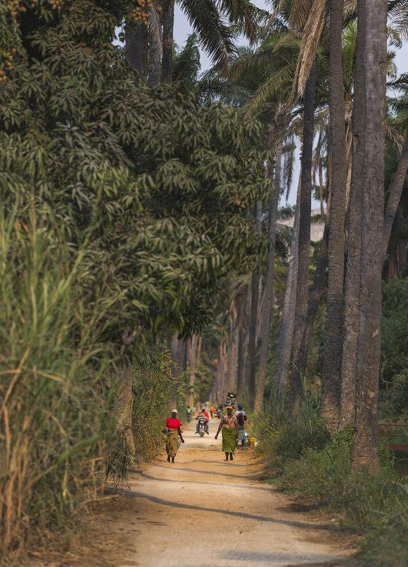 Ангола, аллея, жара, пальмы,  Другая жизньphoto preview