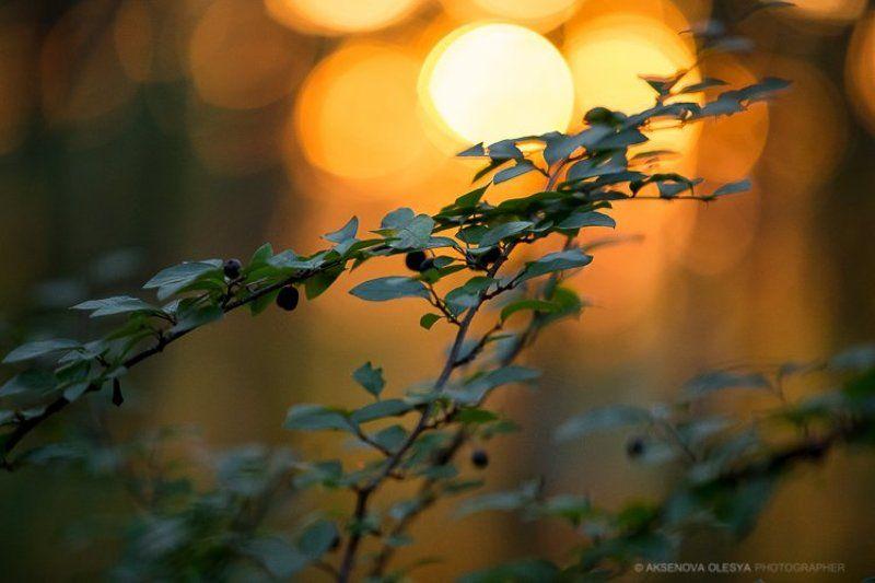 пейзаж, блик, солнце, листья, закат, желтый Осенний вечерphoto preview