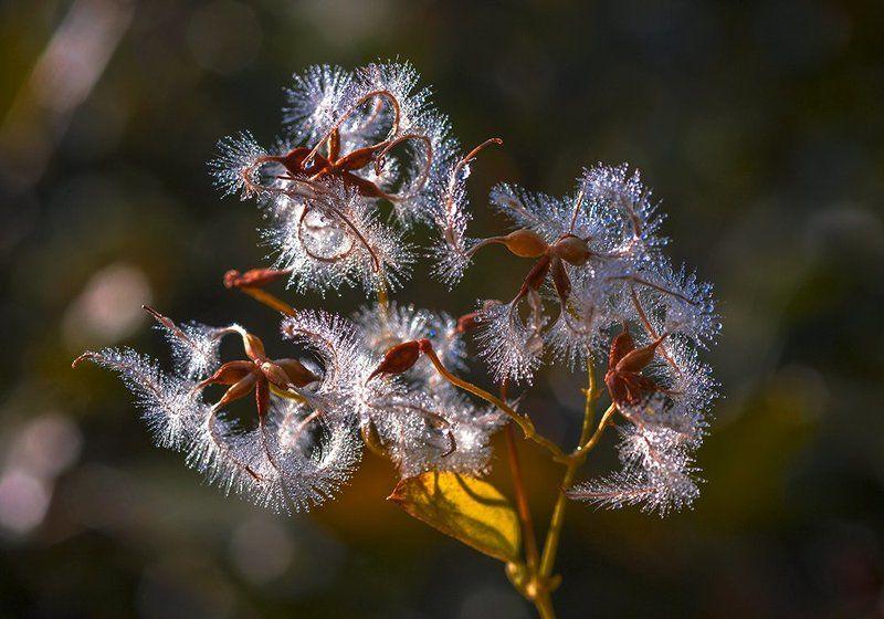 Природа, растения, роса Утренняя росаphoto preview