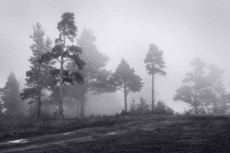 туман, деревья Просто природа, укутанная туманами ...photo preview
