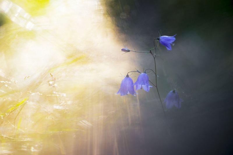 Свет и теньphoto preview