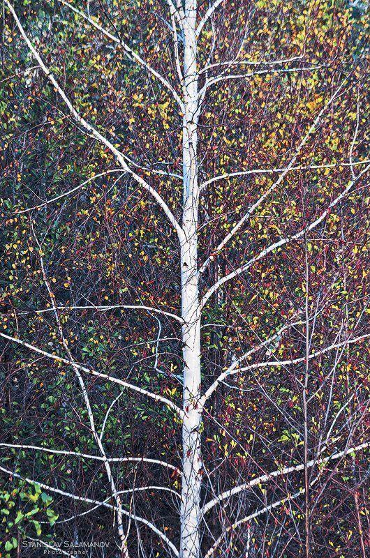осень, листья, листва, краски, арт, сезон Осень рисуетphoto preview