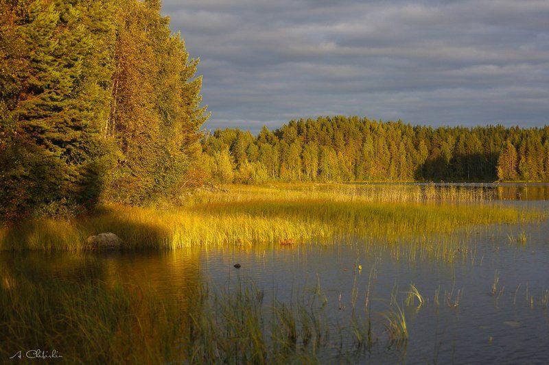 карелия, пейзаж, осень, октябрь, золото, закат, озеро Улыбка осенней Карелииphoto preview