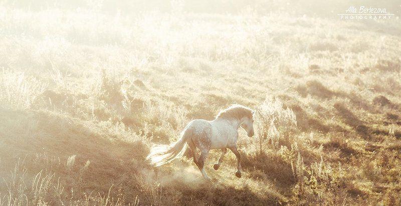 лошадь, лошади, свет, поле, андалуз, horse, horses, light, field, andalusian Андалузская конеферма MCphoto preview