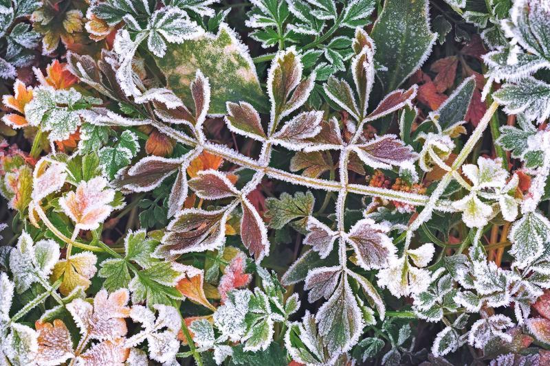 утро, заморозок, иней, осень, октябрь, крупный план, абстракция Дыхание осениphoto preview