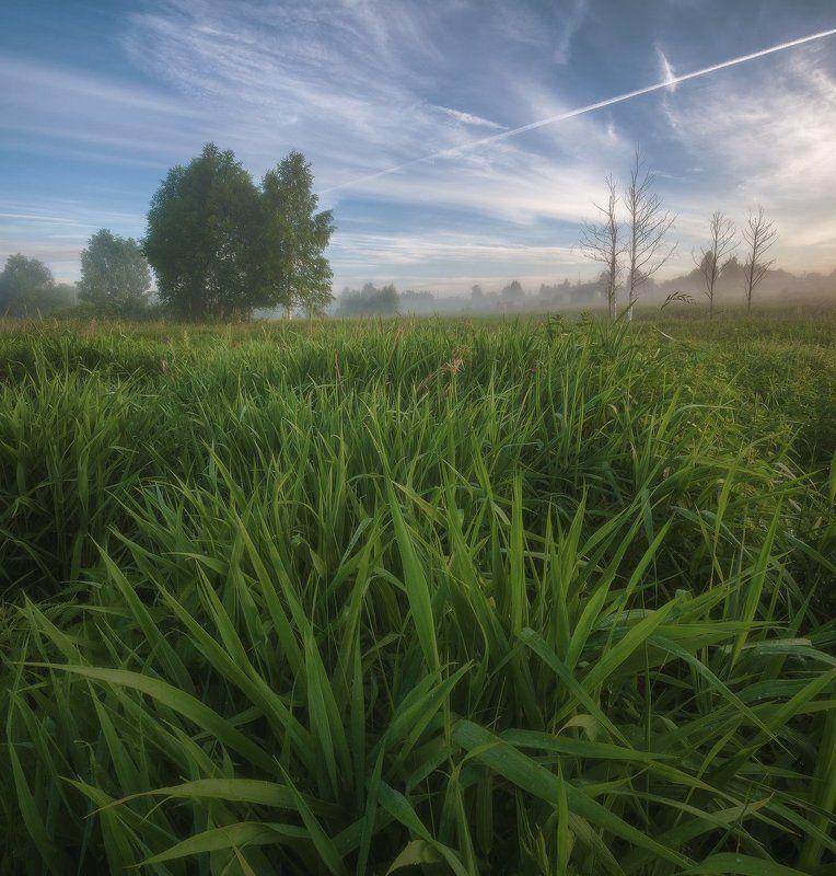 россия, подмосковье, лето, утро, рассвет, туман, свет, поле, трава, роса, небо, облака, деревья Утренняя тишинаphoto preview