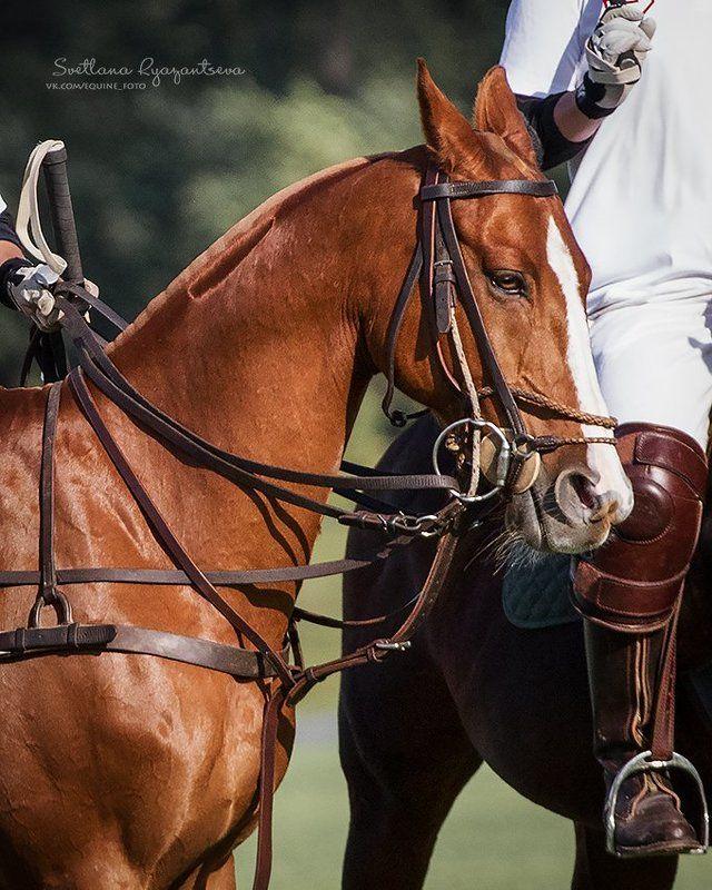 horse, лошадь, лошади, polo, details ***photo preview