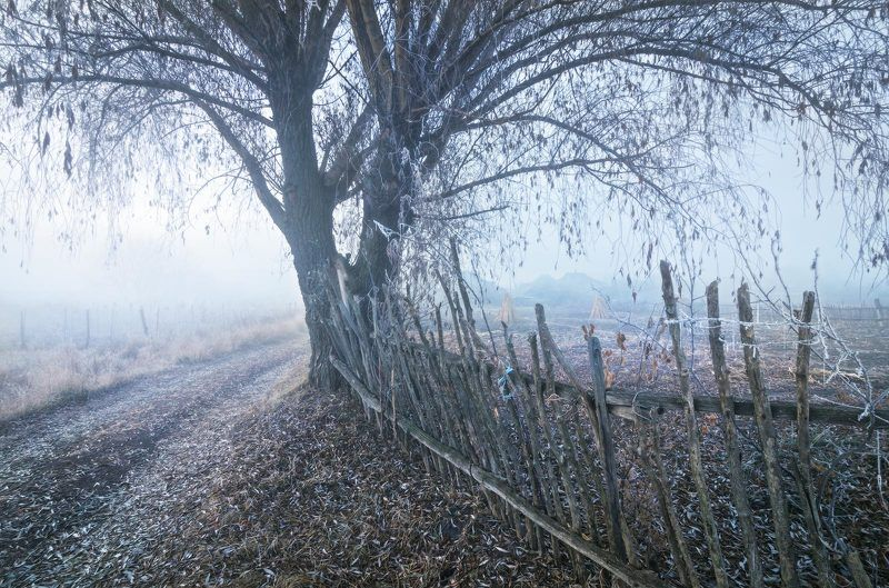 утро, туман, заморозок, околица, иней, изморозь, забор, огороды, пейзаж, дерево, дорога, проселок Зима осень караулит...photo preview