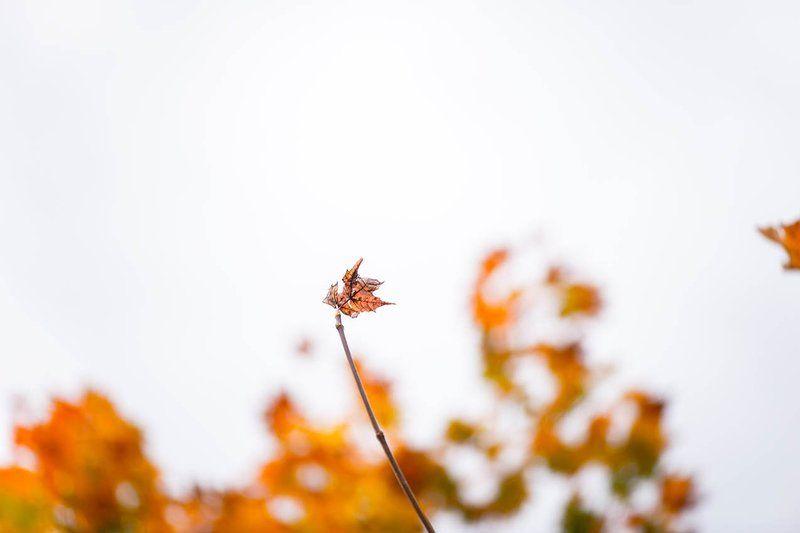 ...против ветра photo preview