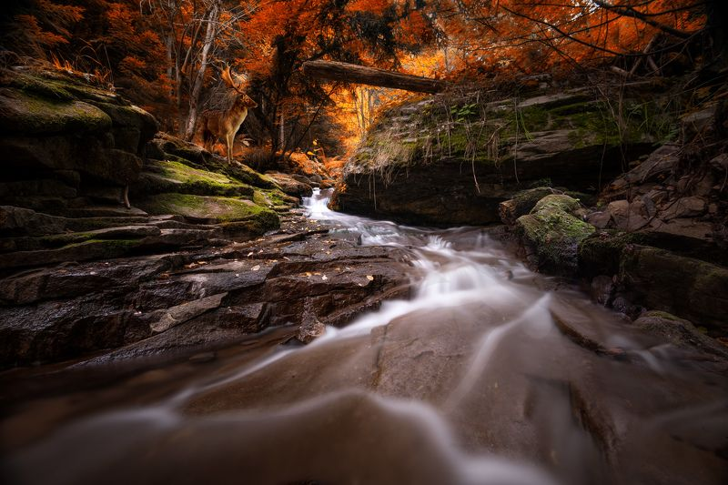 forest, river, fall, autumn, Autumn in the forestphoto preview