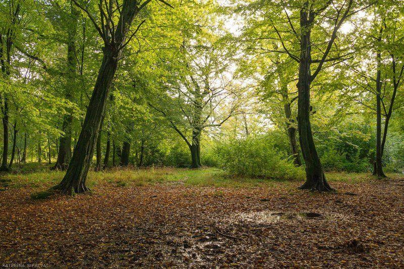 природа, лес, осень, пейзаж После дождика в лесуphoto preview