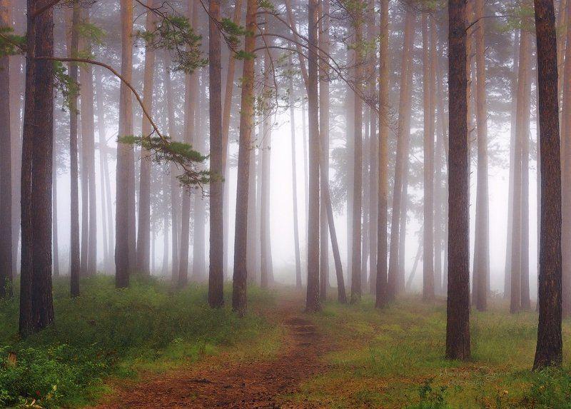 лес, туман, осень, сосны, сибирь Тропинка в туманыphoto preview