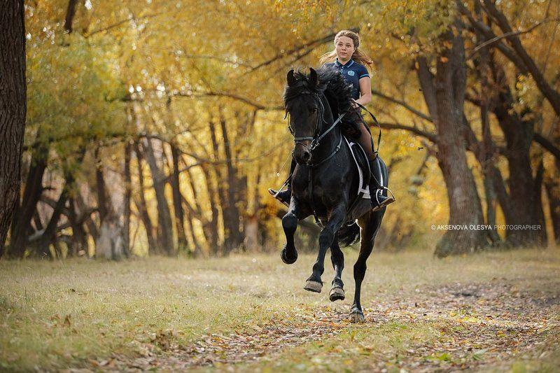 скорость, лошадь, осень, галоп, фриз Ксения и Ахты Ахтыphoto preview