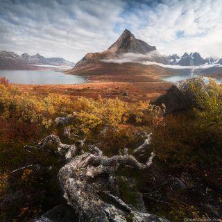 Осенний ковер Арктики