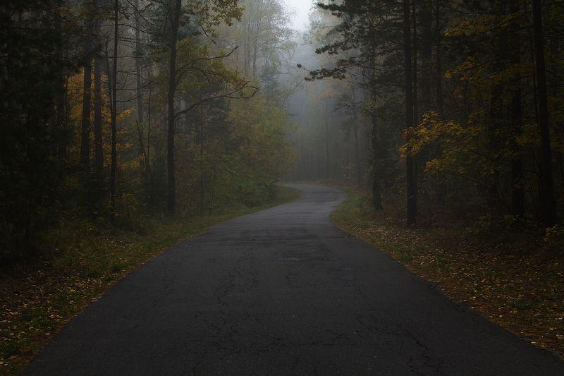 брянск, круглое озеро, алексей платонов, осень, туман, утро,дорога Дорога в осеньphoto preview