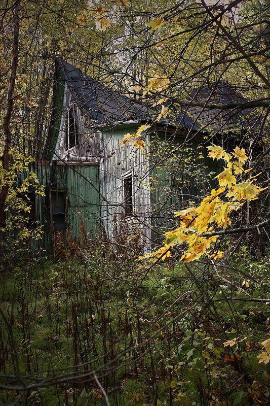#deep.spb, #deepspb, #decay, #abandoned, #abandonedplaces, #abandonedworld, #арт, #art, #light, #shadows, #colors, #парк, #листья, #осень, #walls, #window, #nature, 171011.1photo preview