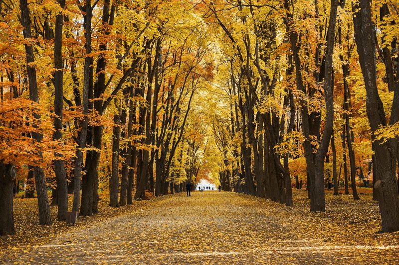 воронеж,осень Осеньphoto preview