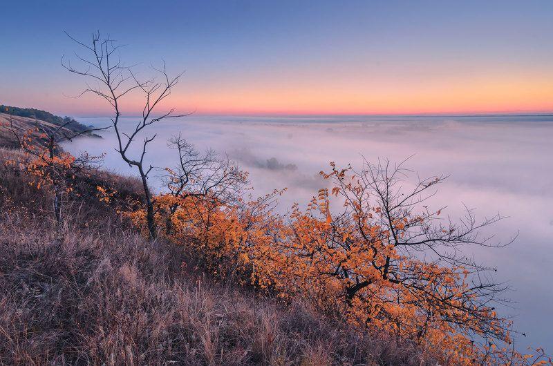 утро, сумерки, туман, кручи, осень, рассвет, деревья, сезон, тишина В сумерках рассветаphoto preview
