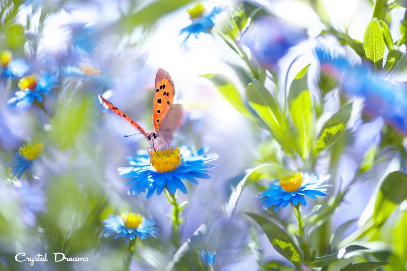 crystal dreams, macro, summer, color, art, nature, butterfly My flower skyphoto preview