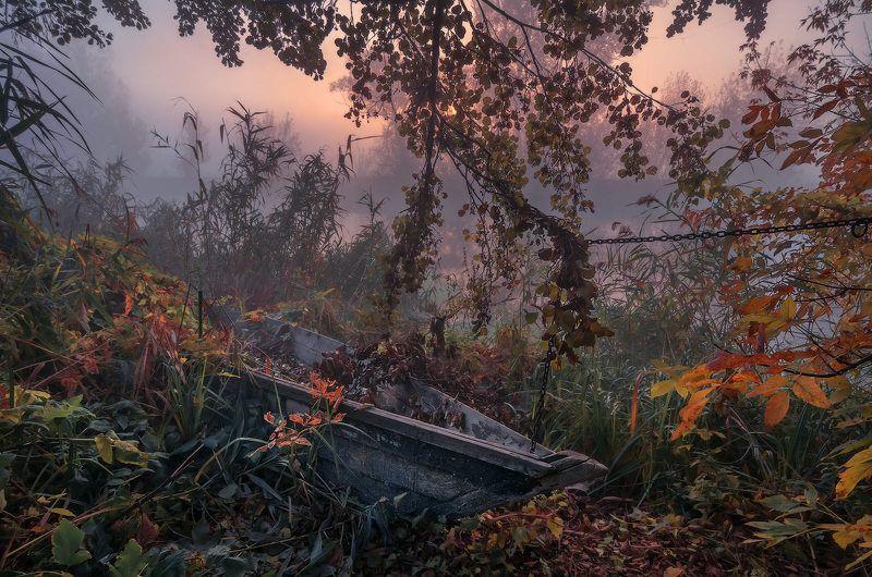 утро, рассвет, туман, солнце, река, пейзаж, лодка, пристанище, осень, камыш До следующего лета...photo preview