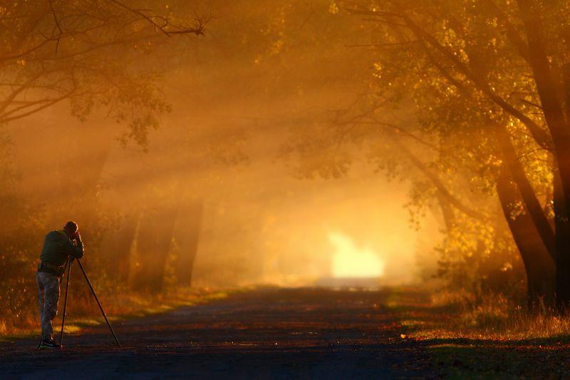 рассвет, туман, утро, осень Про светphoto preview