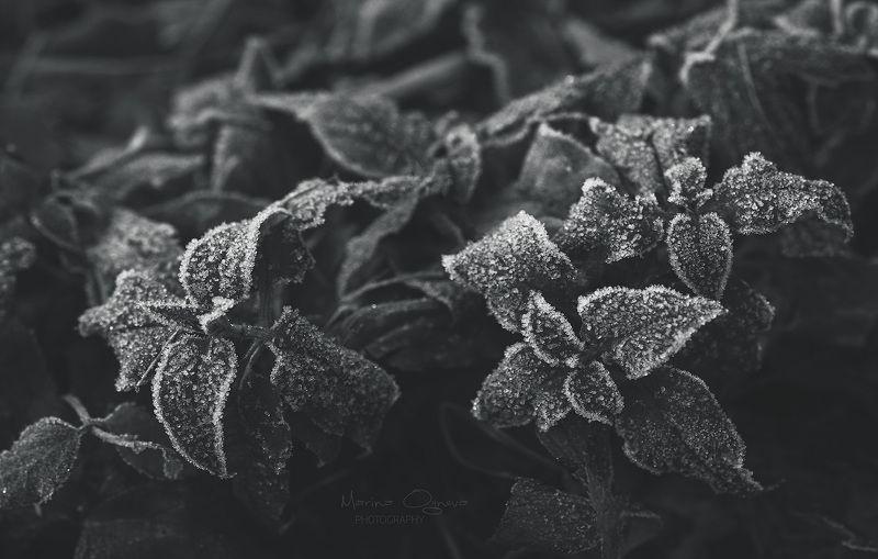 Трава, листва и сахарная пудраphoto preview