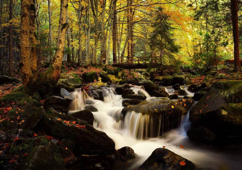 The Autumn beauty of naturephoto preview