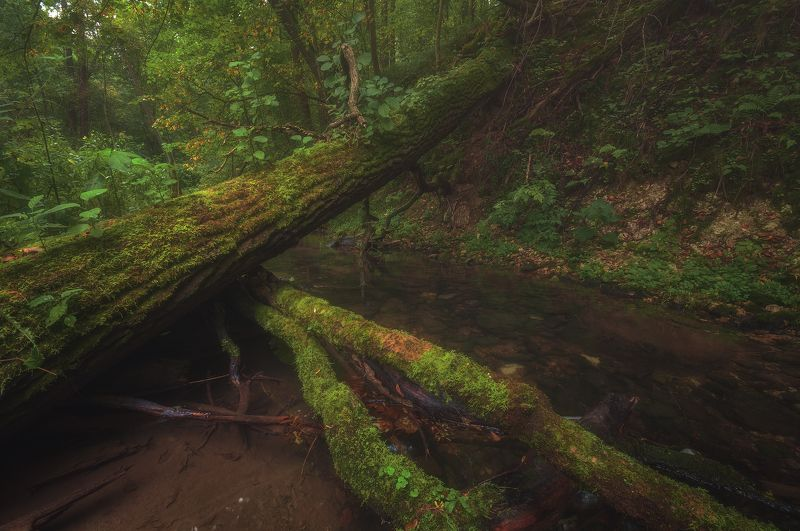 россия, подмосковье, лето, осень, лес, река, мох, вода, деревья, камни, утро, свет По каньону Бунчихиphoto preview