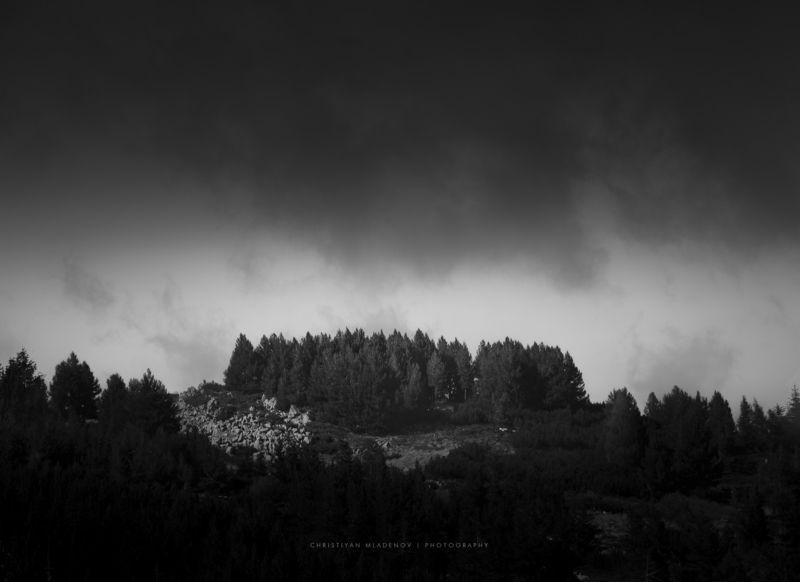 landscape, mist, fog, rain, vitosha, bulgaria, mountain, autumn, fall, pines, light, haze, trees, forrest, hills, black and white Vitosha Highlandsphoto preview