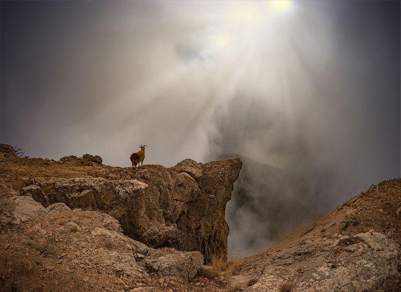 пейзаж, коза, лучи \