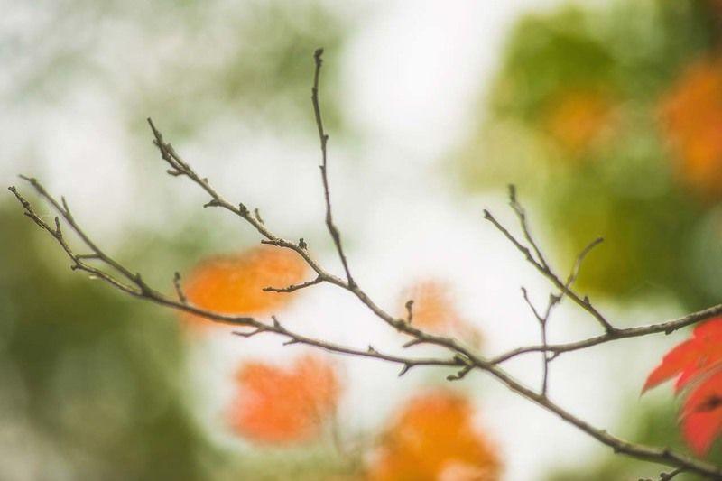 осенняя акварельphoto preview