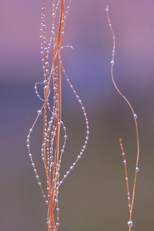 Природа, растения, стебли растений, роса, макро Связующие нитиphoto preview