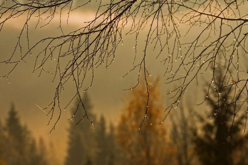 карпаты, осень, туман, утро Грустная осень...photo preview