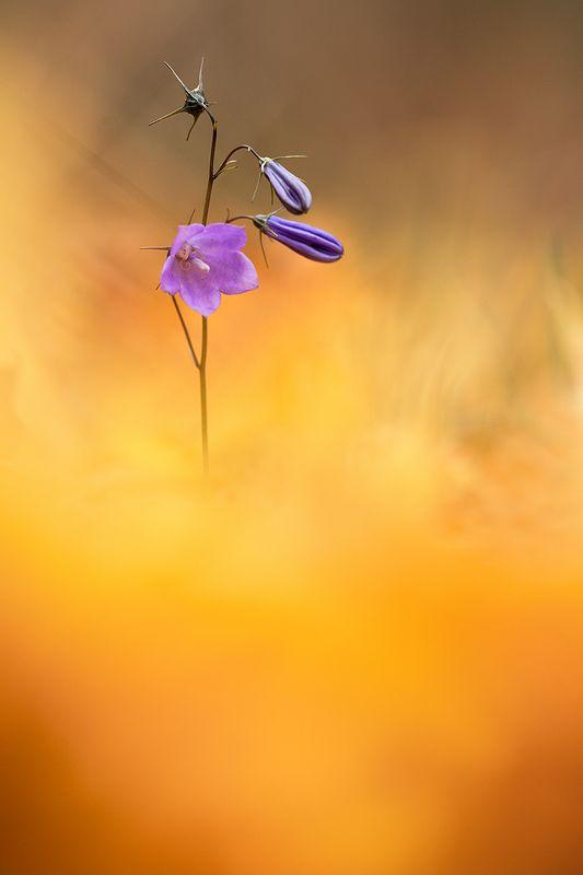 цветы,цветок,макро,растения,природа,осень,листопад,листья,желтый Сквозь осеньphoto preview