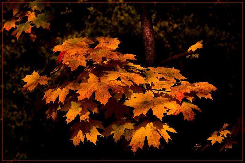 осень,листва Безмолвно сгорает минувшее лето...photo preview