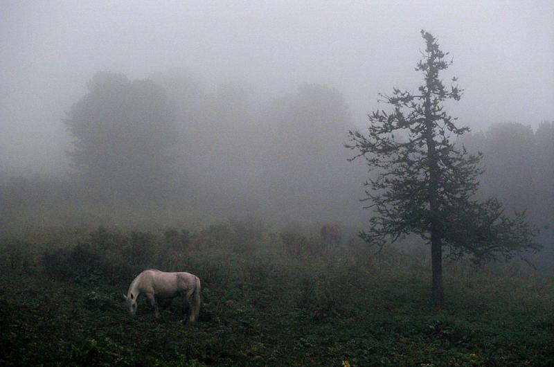 лошадь туман лес алтай В поисках ежа 2photo preview
