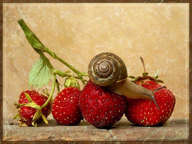 улитка, клубника, ягодка, открытка photo preview
