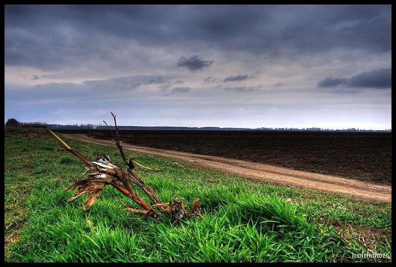 кукуруза, царица, полей, юг, ростов Царица полейphoto preview