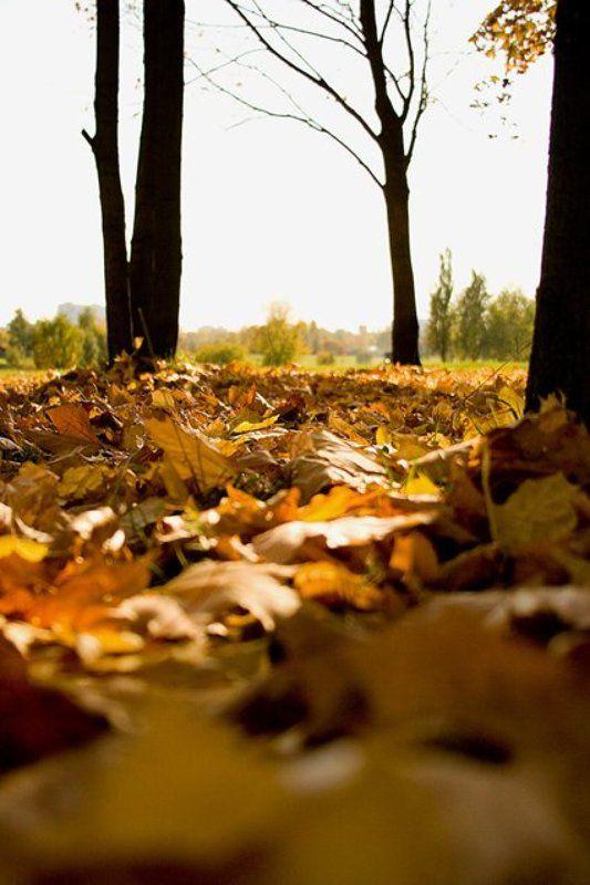 осень,парк,листья Осеньphoto preview