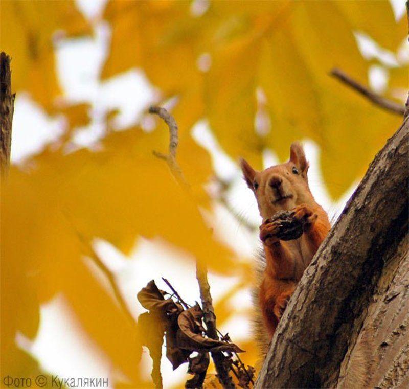 белочка осень орешки превед Осенний преведphoto preview