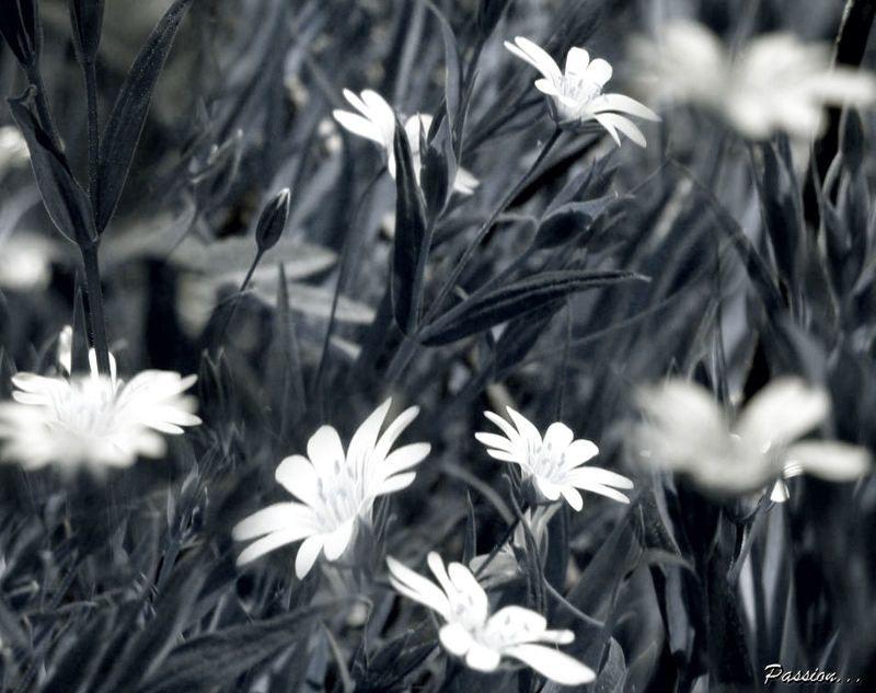 цветы ах  летто....photo preview