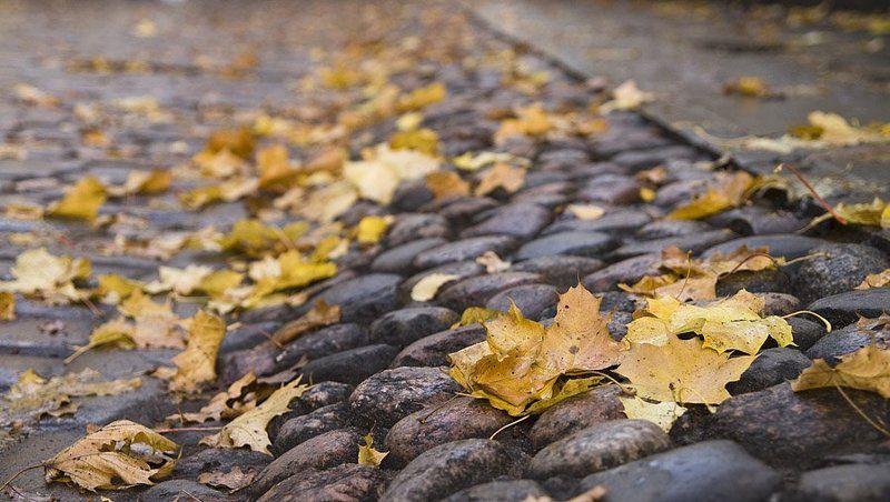 листья, осень, камни Осеннее настроениеphoto preview