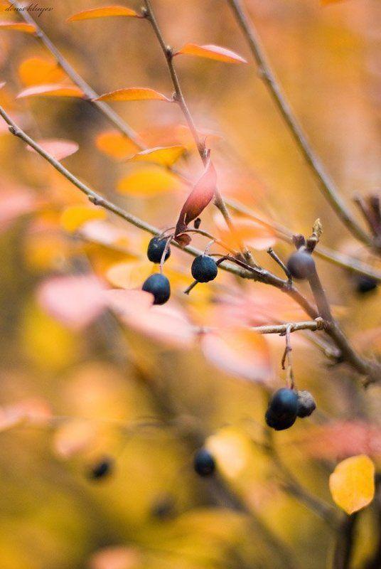 фото, природа, осень, клюев, variart Осенняя #3photo preview