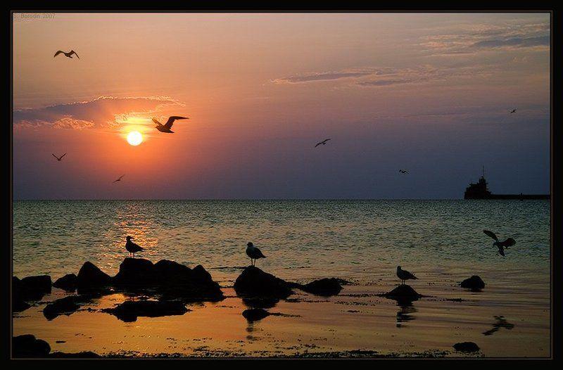 чайки, море, восход, крым, феодосия Одиннадцать спутниц восходаphoto preview