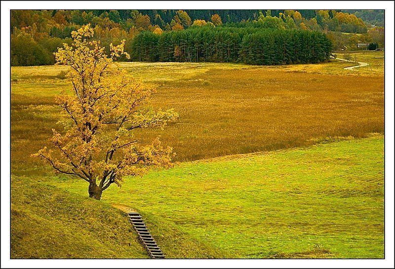 осень, природа, дерево ***photo preview