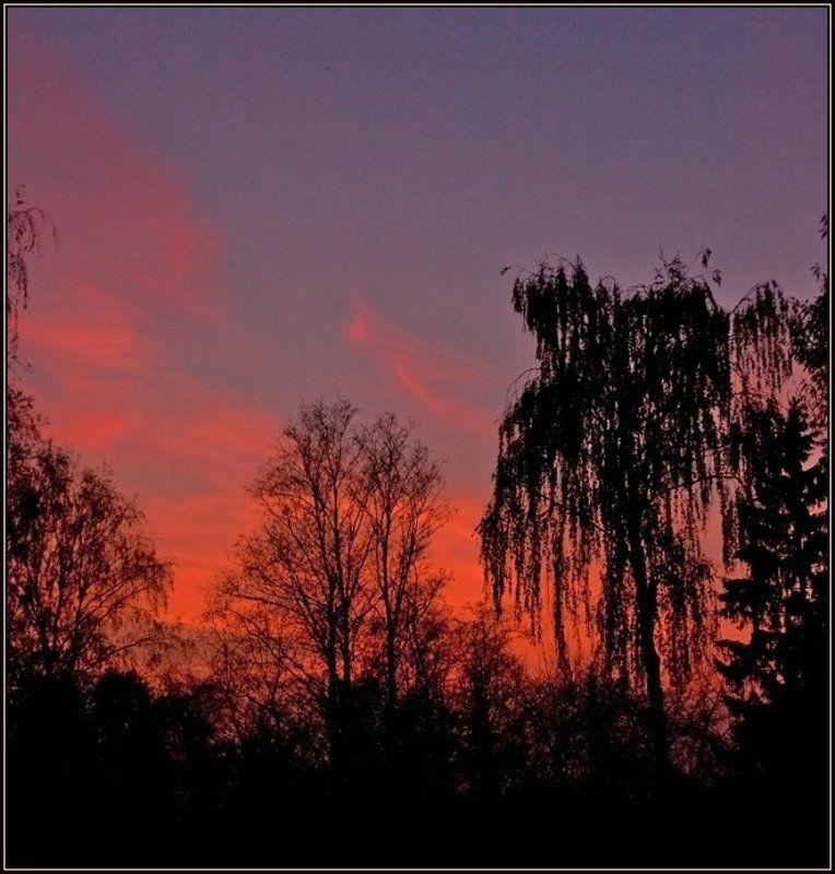 закат, силуэты, осень Силуэты осениphoto preview