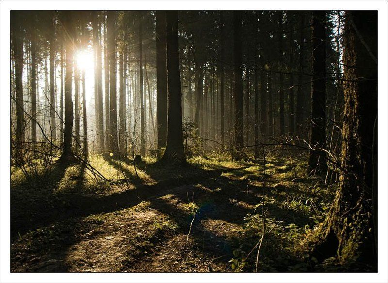 пейзаж, лес, лучи, солнце, туман photo preview